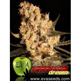 Jamaican Dream - Eva Seeds femminizzati