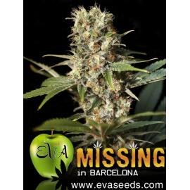 Missing in Barcelona - Eva Seeds femminizzati