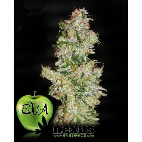 Nexus - Eva Seeds femminizzati
