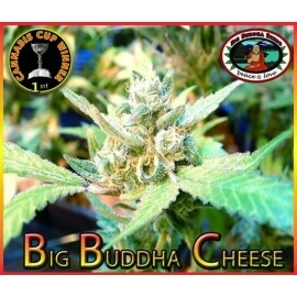 Big Buddha Cheese - Big Buddha Seeds femminizzati