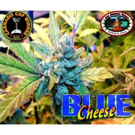 Blue Cheese - Big Buddha Seeds femminizzati Big Buddha Seeds €35,00