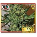 Cheese Auto - Big Buddha Seeds femminizzati