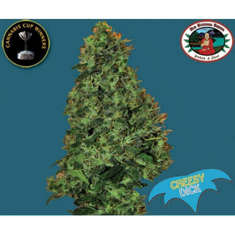 Cheesy Dick - Big Buddha Seeds femminizzati Big Buddha Seeds €35,00