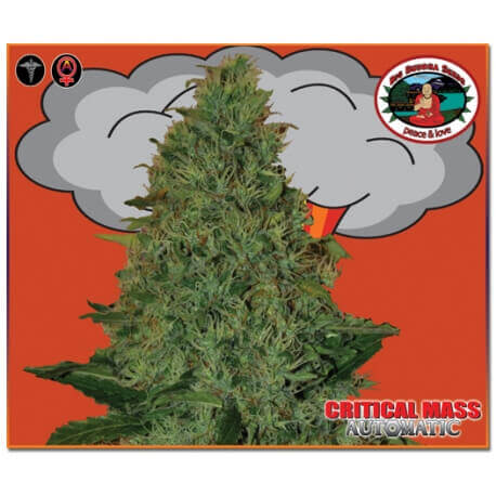 Critical Mass Auto - Big Buddha Seeds femminizzati Big Buddha Seeds €35,00