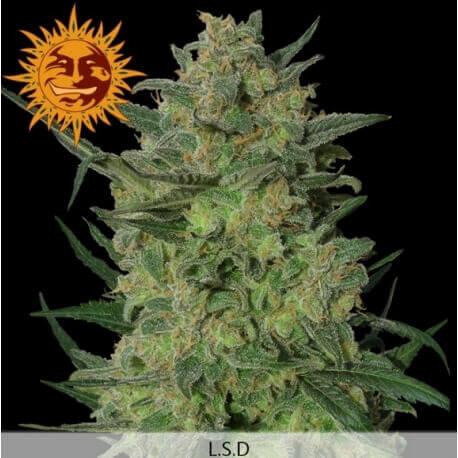 LSD - Barney's Farm femminizzati Barney's Farm €28,00
