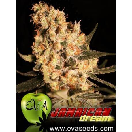 Jamaican Dream - Eva Seeds femminizzati Eva Seeds €58,00