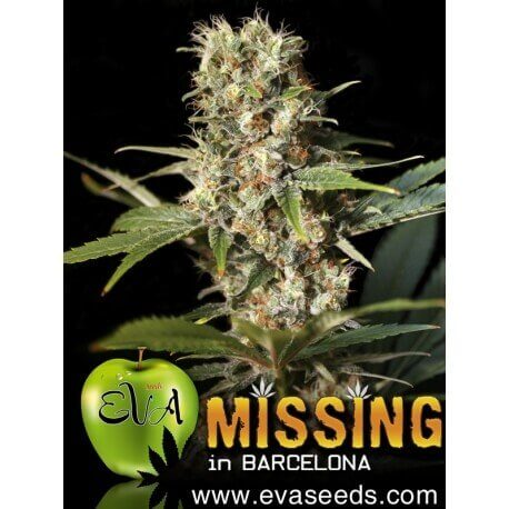 Missing in Barcelona - Eva Seeds femminizzati Eva Seeds €54,00