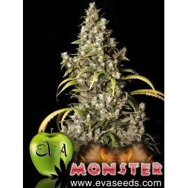 Monster - Eva Seeds femminizzati