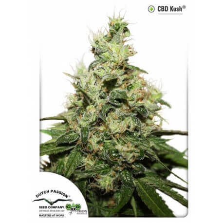 CBD Kush - Dutch Passion femminizzati Dutch Passion €27,00