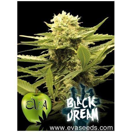 Black Dream - Eva Seeds femminizzati