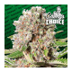 Mendocino Skunk - Paradise Seeds femminizzati Paradise Seeds €26,00