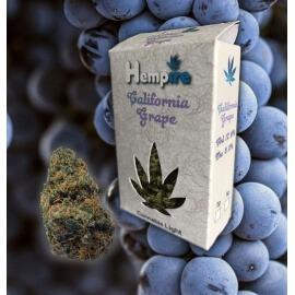 California Grape - Hempire Hempire €10,00