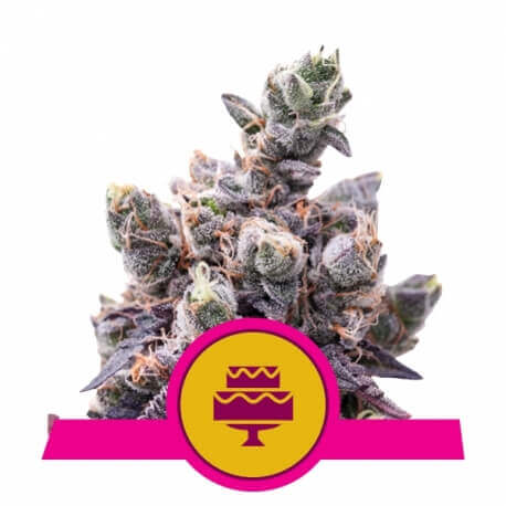 Wedding Gelato - Royal Queen Seeds femminizzati Royal Queen Seeds €32,00