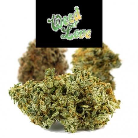 Queen of Peace (Blue Star) - Weed of Love Weed of Love €12,00