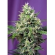 Sweet Amnesia Haze XL Auto - Sweet Seeds femminizzati Sweet Seeds €22,50