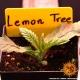 Lemon Tree - Barney's Farm femminizzati Barney's Farm €40,00