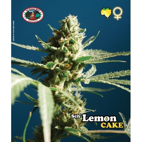Sch' Lemon Cake - Big Buddha Seeds femminizzat Big Buddha Seeds €34,99