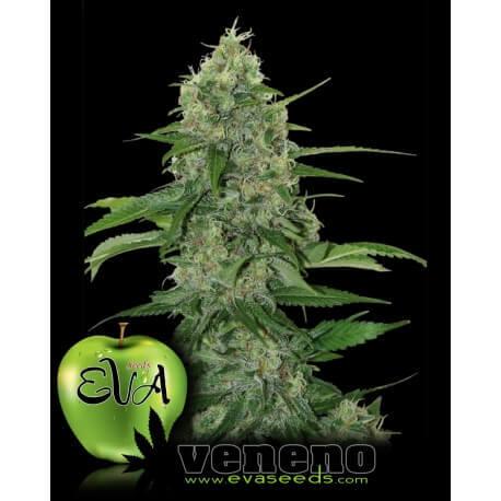 Veneno - Eva Seeds femminizzati Eva Seeds €60,00