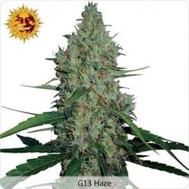 G13 Haze - Barney's Farm femminizzati